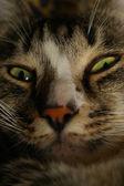 Yeux de chat — Photo