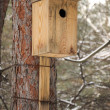 Stock Photo: Closeup of birdhouse attached to tree
