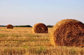 Golden Hay Bales — Stock Photo