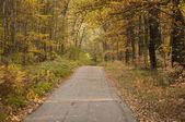 Лесная дорога в осень — Стоковое фото