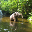 Постер, плакат: Elephant enjoying the river