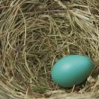 Stock Photo: Robin's Egg