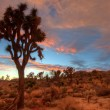 Joshua Tree Sunset — Stock Photo