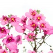 Flora against white background. useful design element. - Stock Photo