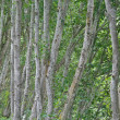 Trees abstract - Stock Photo