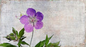 Floral background image — Stock Photo