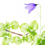 Lovely spring flora — Stock Photo #10089249