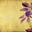 Floral background and design element — Stock Photo #10089433