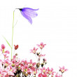 Lovely spring flora - Foto Stock