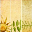 Lovely set of banners with floral elements and earthy textures - Photo