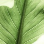 Leaf background — Stock Photo