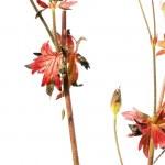 Lovely spring flora — Stock Photo #10090915
