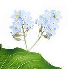 Lovely spring flora — Stock Photo