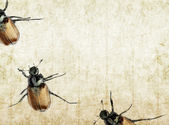 Four beetles against background — Stock Photo