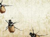 Quatro besouros contra fundo — Foto Stock