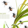 Spring concept. flora and beetles against white background — Stock Photo