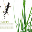 Spring concept. flora and a couple of salamanders against white background. — Stock Photo