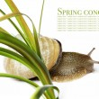 Snail and flora against white background. — ストック写真