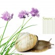 Snail and flora against white background. - Stock Photo