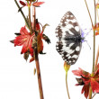 Spring concept. butterfly and flora against white background — Stock Photo