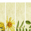 Lovely banners with floral elements and earthy texture. very useful design elements. — Stock Photo