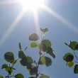 Sun beams and green leaves against blue sky — Stock Photo