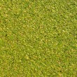The surface is covered with green duckweed. - Stock Photo