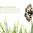 Spring concept. butterfly and flora against white background — Stock Photo #10136211