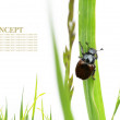 Spring concept. flora and beetles against white background. — Stock Photo