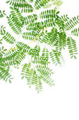 Flora against white background. very useful design element. — Stock Photo