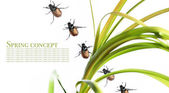 Spring concept. flora and beetles against white background — Foto Stock
