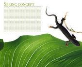 Concetto di primavera. flora e salamandre su sfondo bianco. — Foto Stock