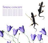 Flora against white background. useful design element — Stock Photo