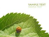 Flora och ladybird mot vit bakgrund. användbar designelement. — Stockfoto