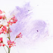 Lovely floral background and design element — Stock Photo #10149468