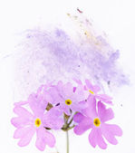 Lovely floral background and design element — Stock Photo
