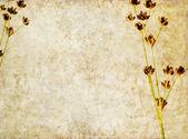 Jordnära floral bakgrund bild och design element — Stockfoto