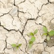 Cracked Earth and young plants - 