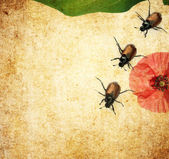Lovely background image with beetles and floral elements. very useful design element. — Stock Photo