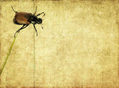 Lovely background image with beetle close up. useful design element. — Stock Photo
