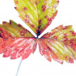 Wilting autumn leaves - Stock Photo