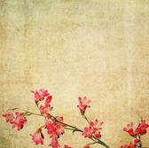 Aardse bloemen achtergrond afbeelding en ontwerp element — Stockfoto