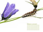 Caterpillar and beautiful flora — Stock Photo