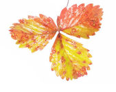Wilting autumn leaves — Stock Photo