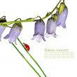 图库照片: Spring flora and ladybird against white background