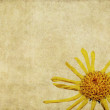 Earthy floral background image — Stock Photo