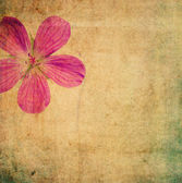 Imagen de fondo floral terroso — Foto de Stock