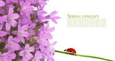 Lovely spring flora against white background — Stock Photo