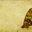 Lovely background image with close-up of a butterfly — Stock Photo