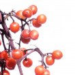 Lovely red berries against white background - Stock Photo